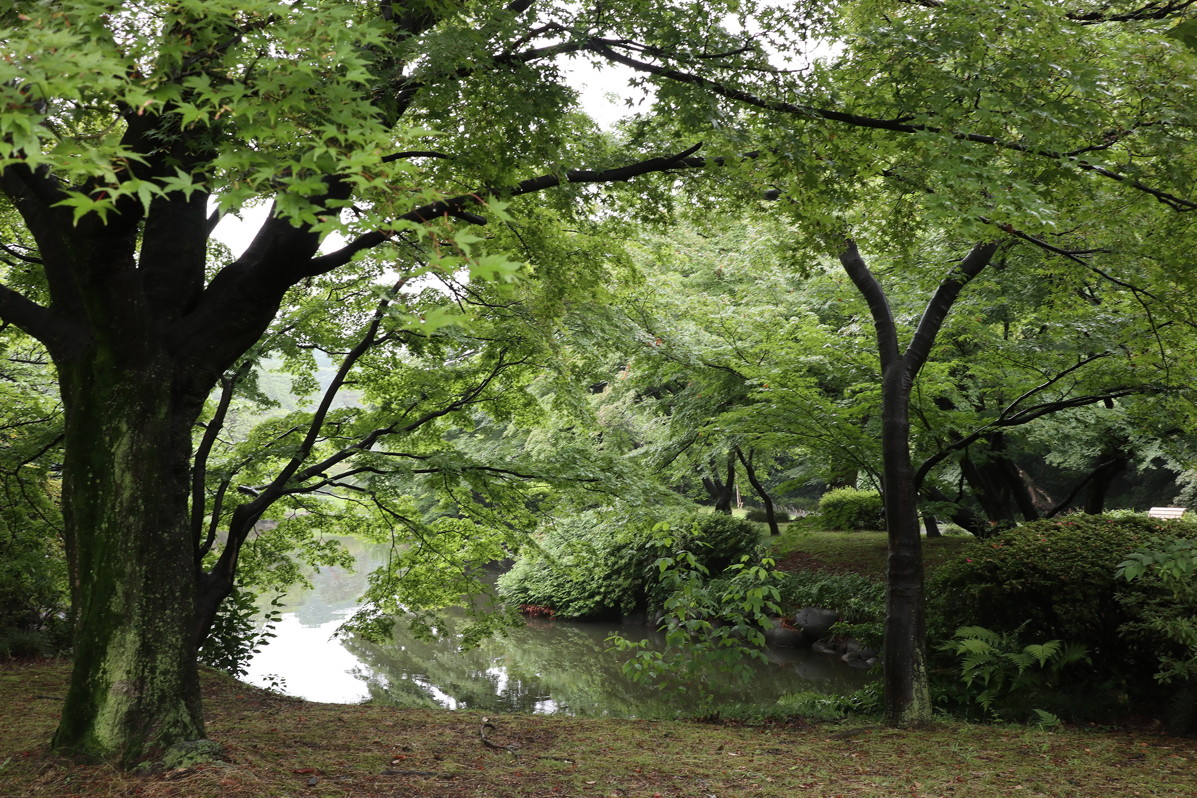 Canon EOS M5 @新宿御苑 -画像10