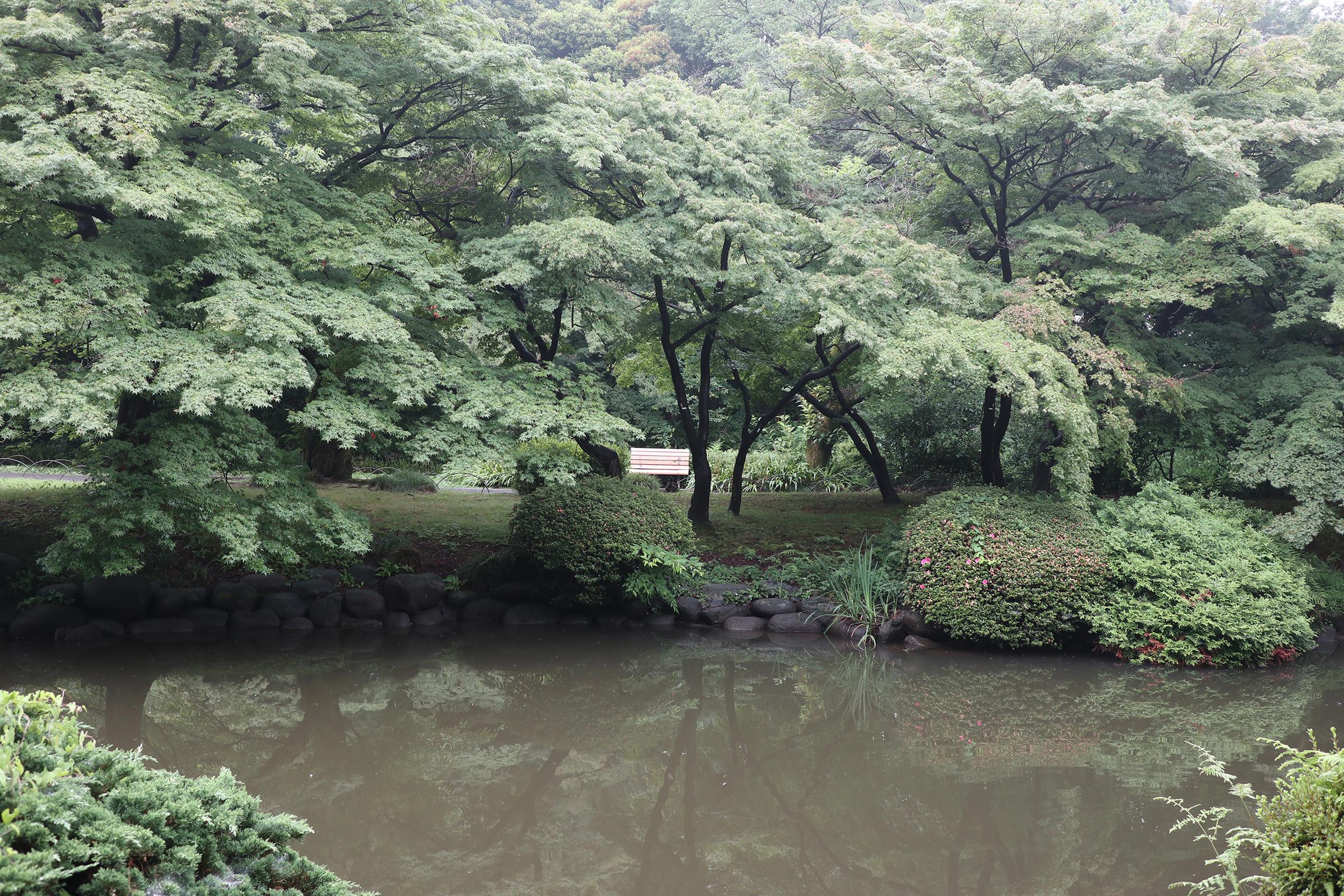 Canon EOS M5 @新宿御苑 -画像11