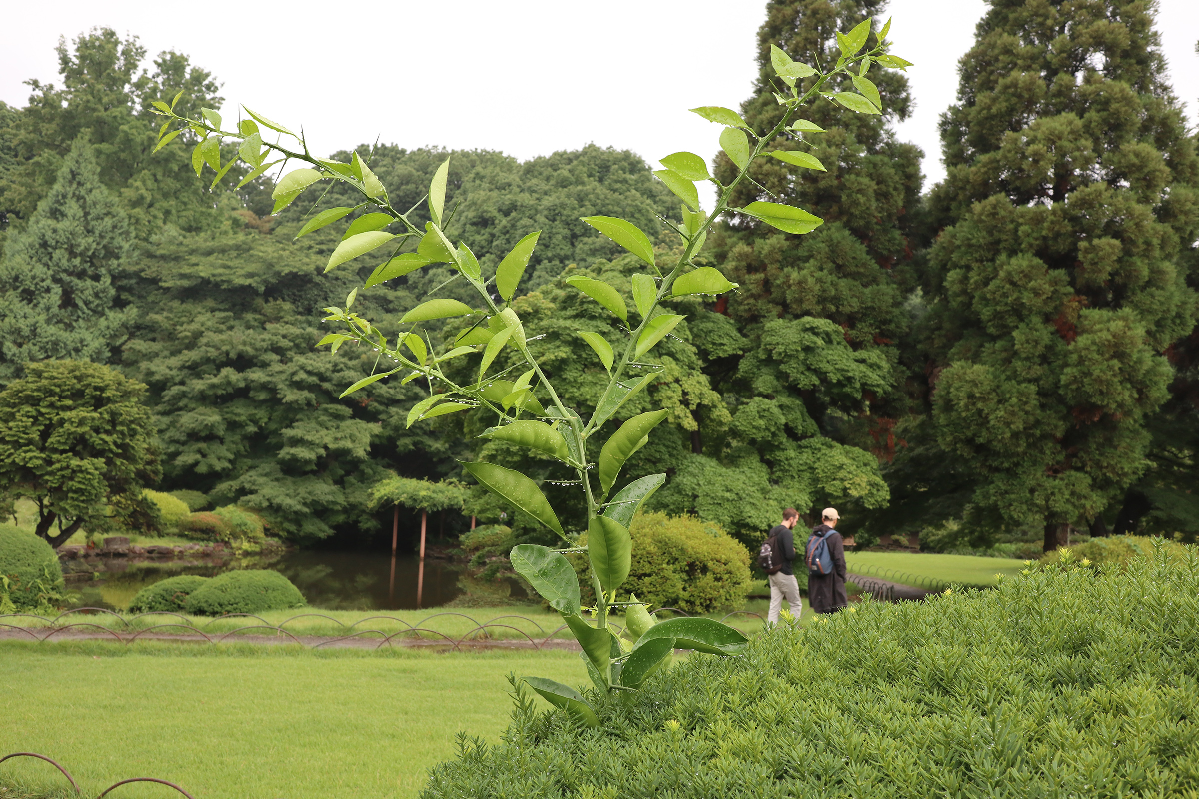 Canon EOS M5 @新宿御苑 -画像17