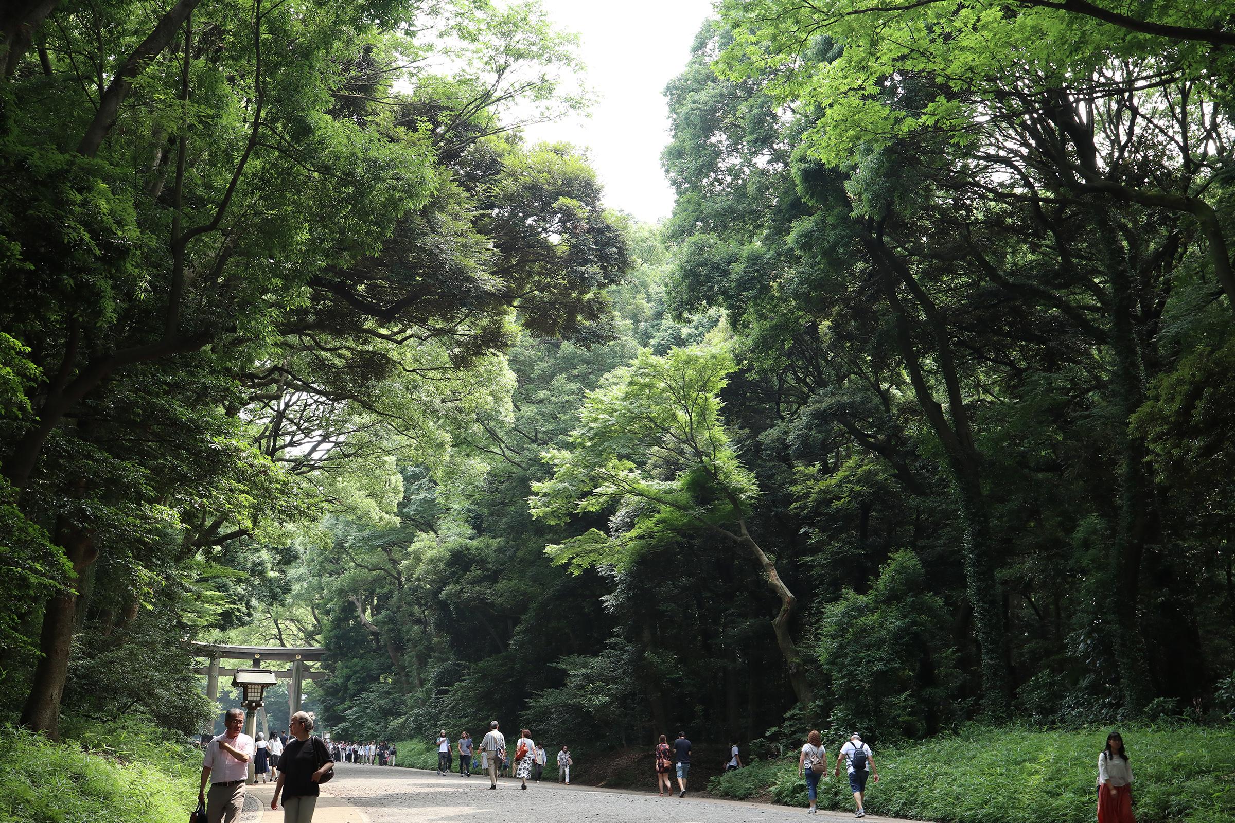 Canon EOS M5 @明治神宮 -画像02