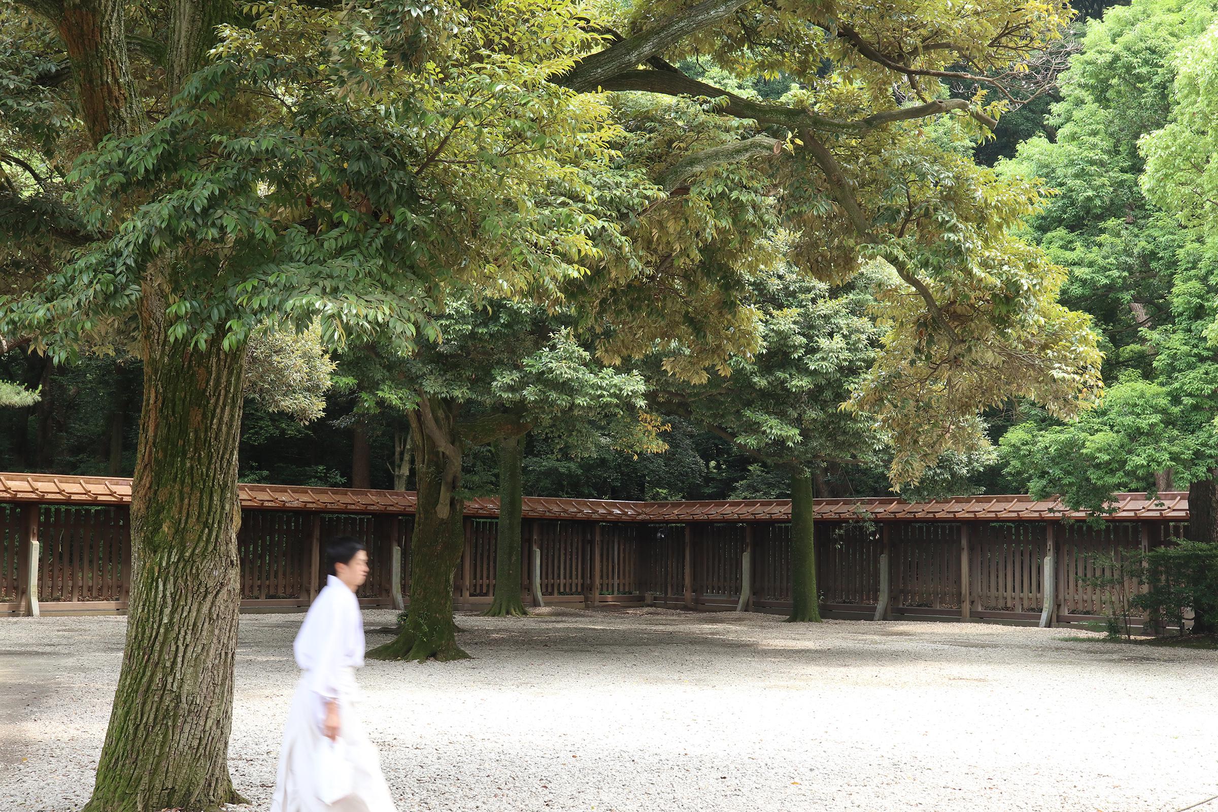 Canon EOS M5 @明治神宮 -画像12