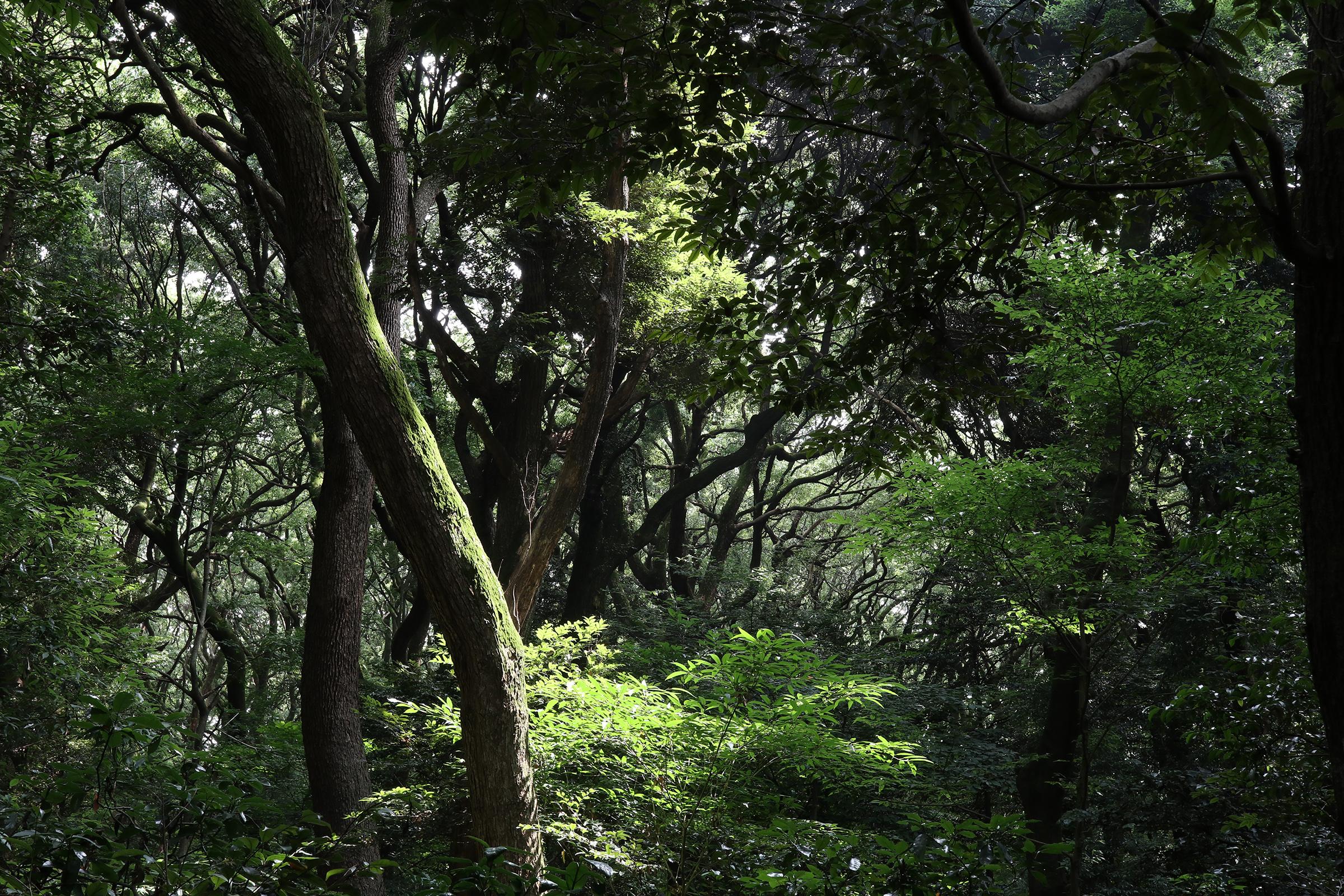 Canon EOS M5 @明治神宮 -画像25