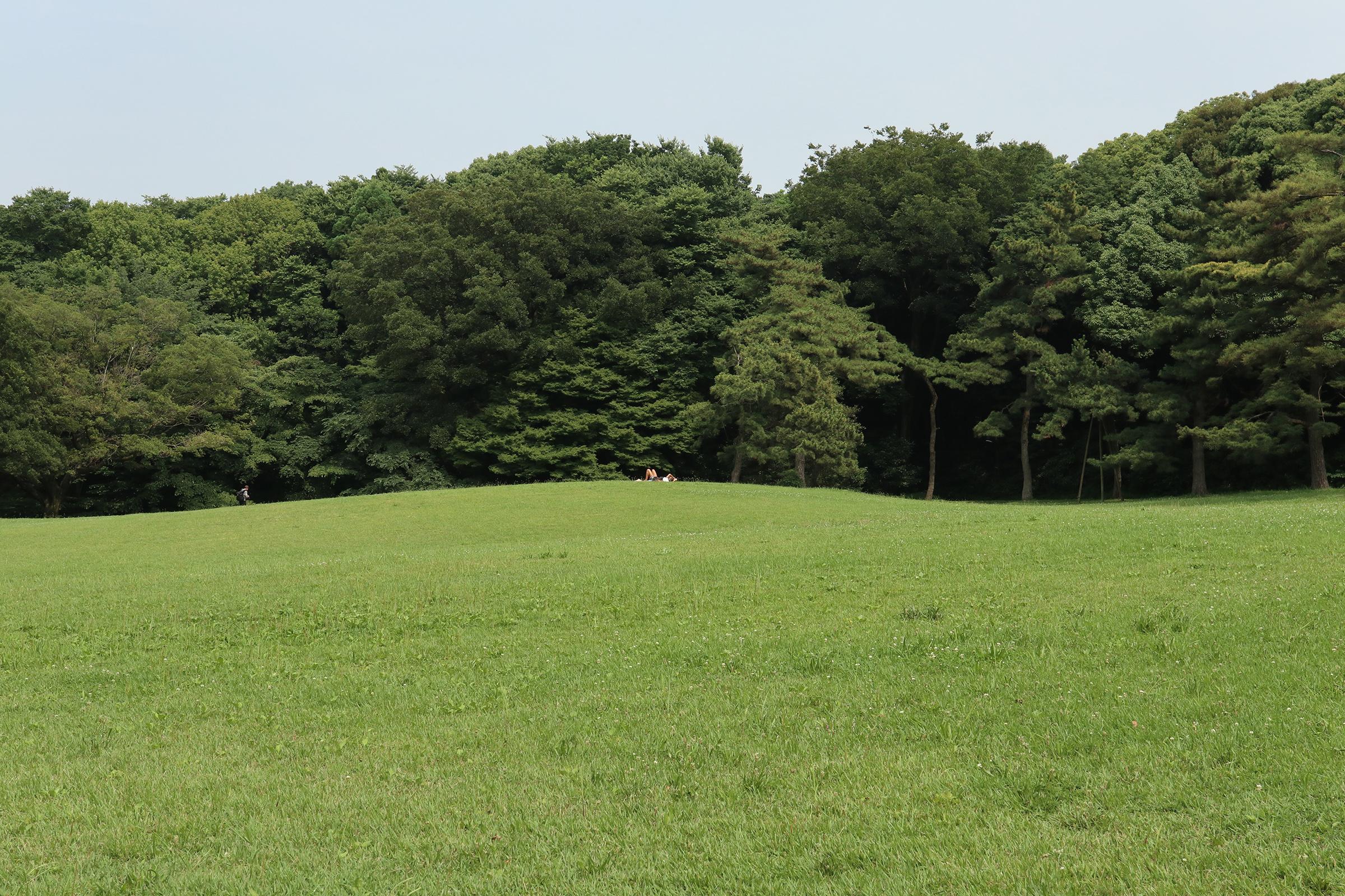 Canon EOS M5 @明治神宮 -画像28
