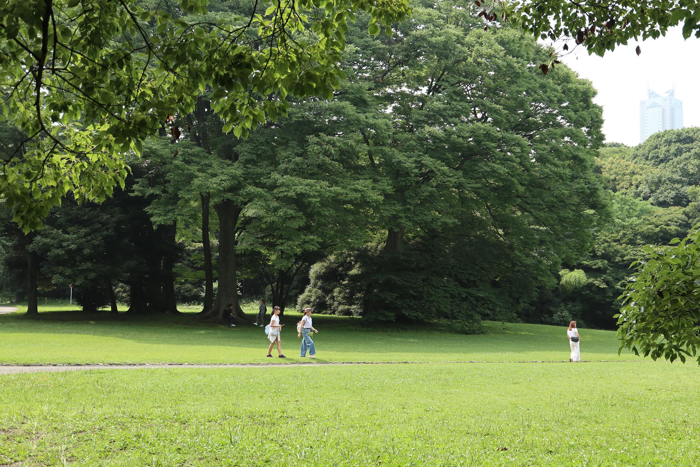 Canon EOS M5 @明治神宮 -画像29