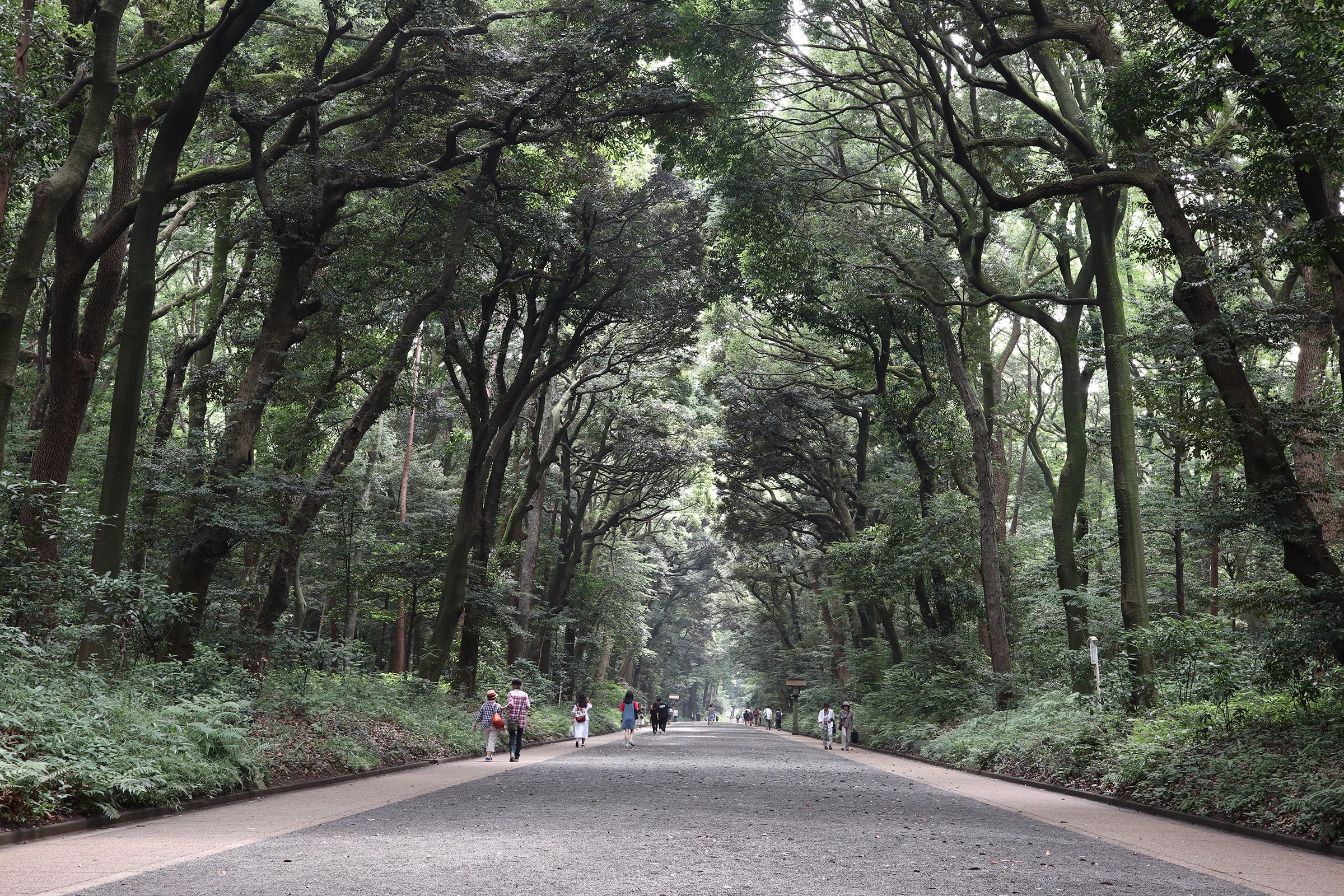 Canon EOS M5 @明治神宮 -画像33